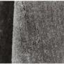 Kép 2/6 - Szőnyeg, világosszürke, 170x240, TIANNA